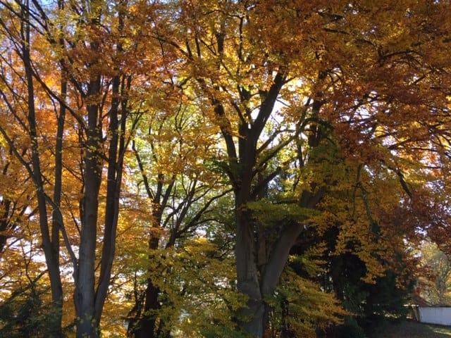 """wingwave und das """"Rascheln der Blätter"""""""